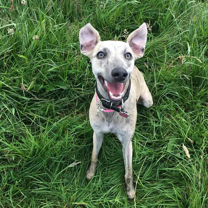 dog training walks Briston Edgefield Holt Alysham Worstead Swanton Abbott North Norfolk
