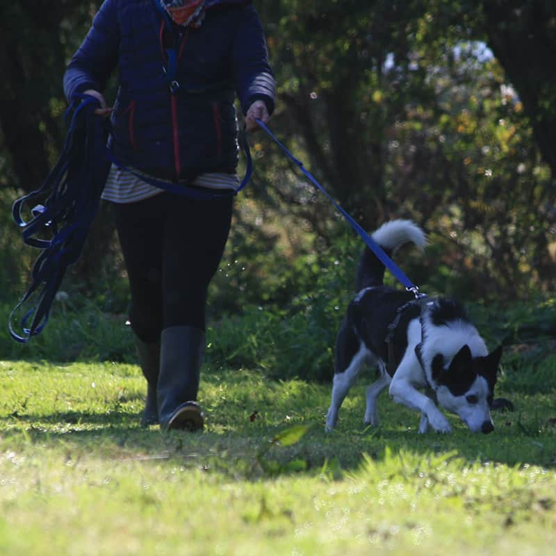 mantrailing for dogs classes Shrewsbury Bicton Heath Montford Pontesbury Bayston Hill Uffington Battlefield Shawbury