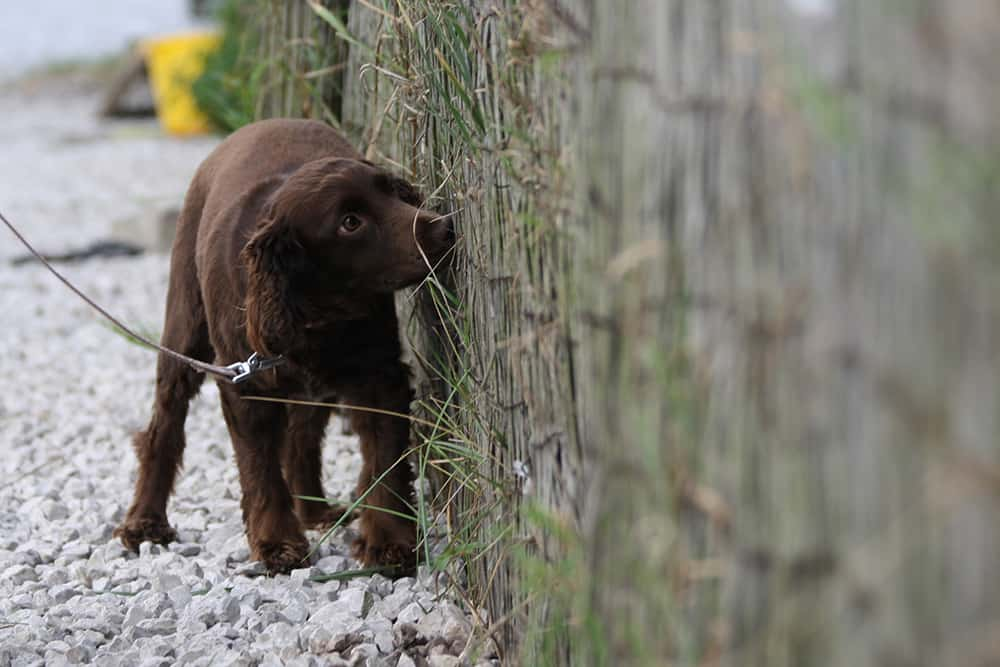 dog scent detection Uffington Battlefield Shawbury