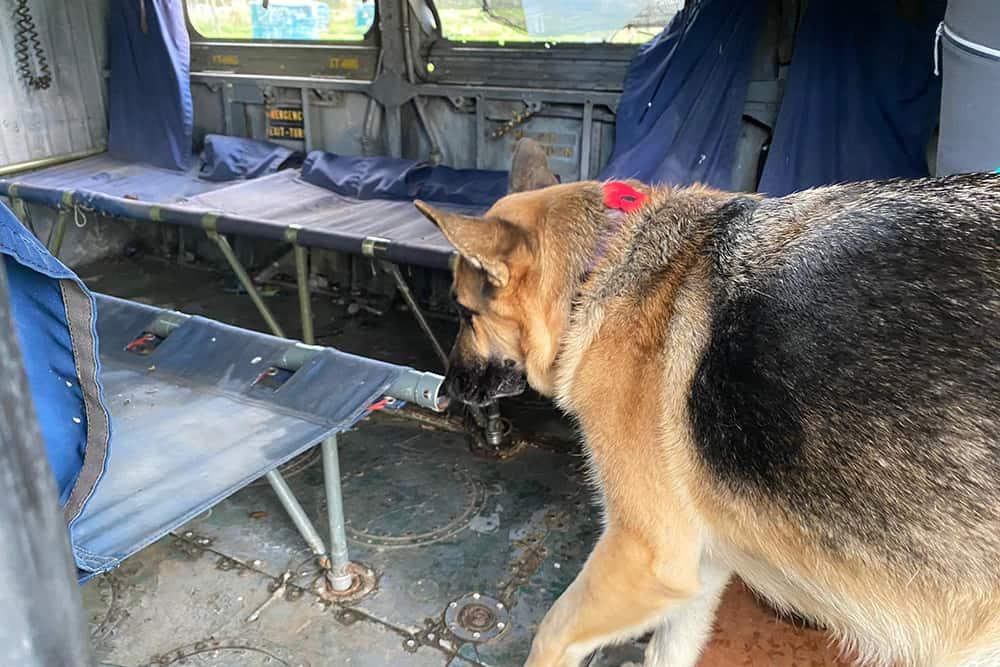 dog scentwork nose work training