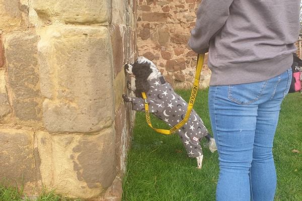 dog scentwork workshop Bicton Heath