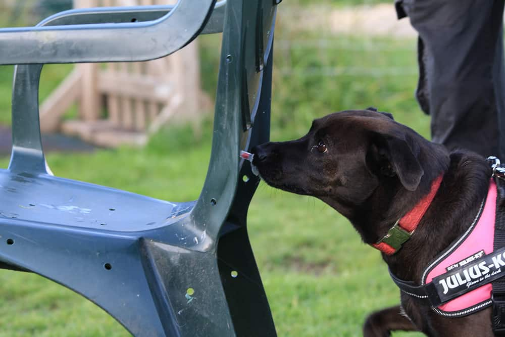 scent detection Shrewsbury dog trainer