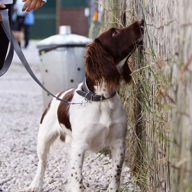 scent detection Shrewsbury dog training class
